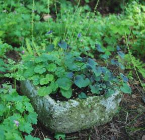 Hypertufa pot in my woodland garden.