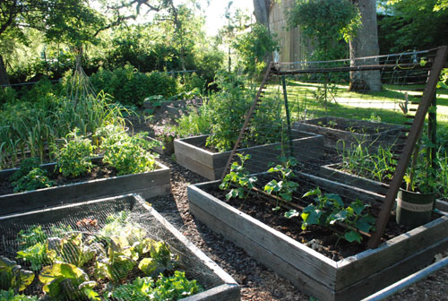 vegetable garden June