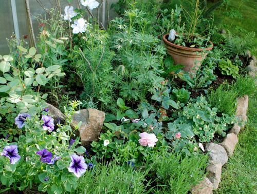 June flowerbed