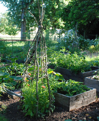 Vegetable Garden Beautification teepee