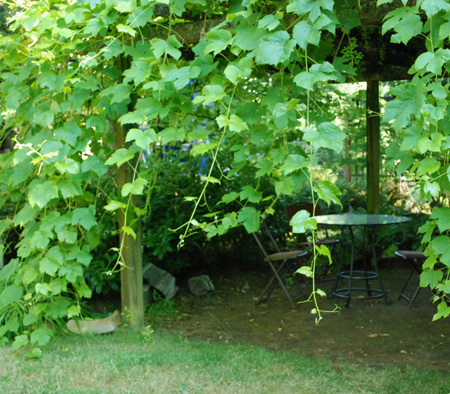 grape arbor inside