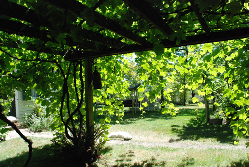 looking out from the arbor
