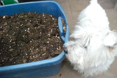potting soil & Max