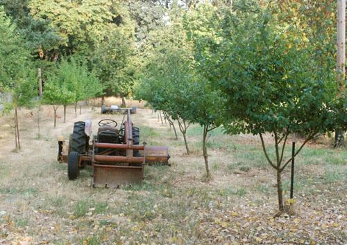 prune orchard