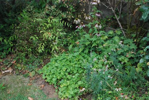 scruffy garden bed