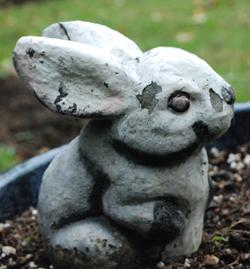 concrete rabbit