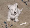 puppy Max