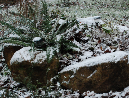 snowy raised bed