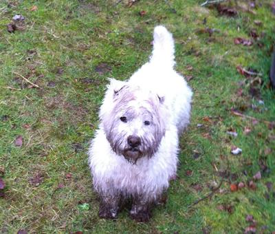 Max needs a bath