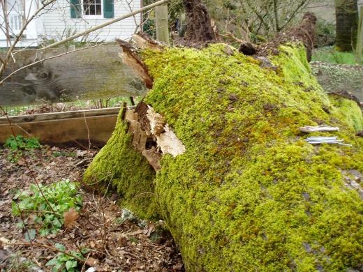 broken oak base