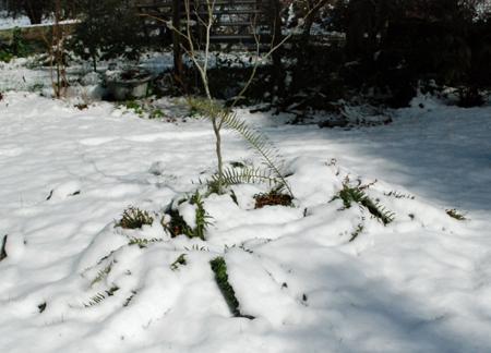 snowy garden bed