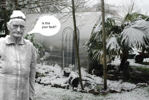Tillie in the snow
