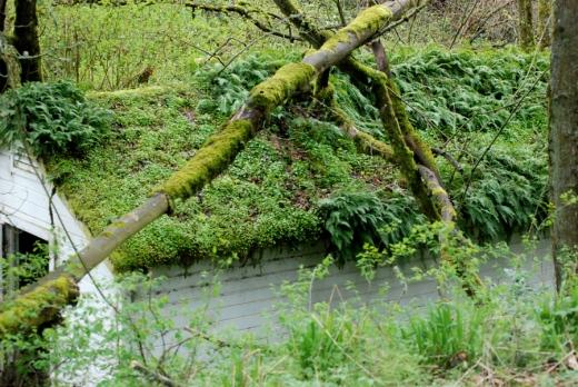 fern roof