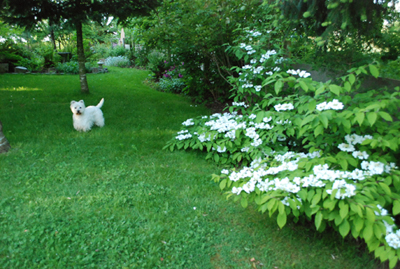 Max and viburnum