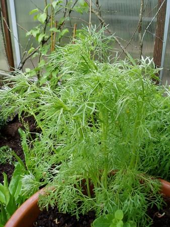 Mysery Plant
