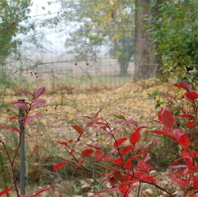 blueberries in autumn