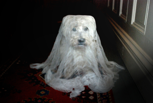 Westie in ghost costume