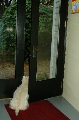 Max checks the temperature outside