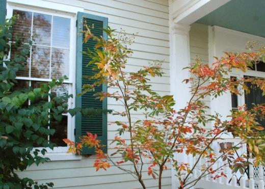 crape myrtle autumn color