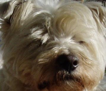 Terrier investigates
