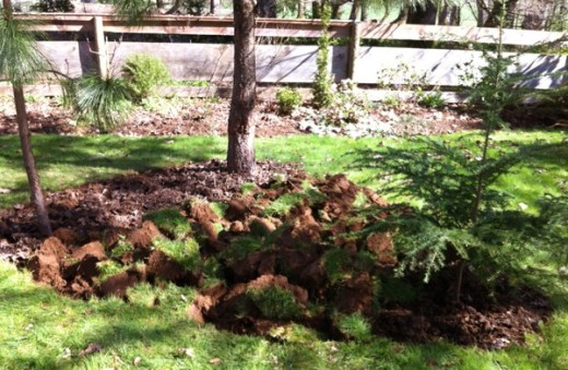 sod clumps