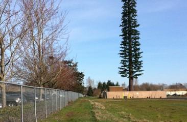 tree tower2