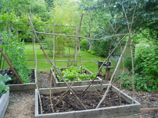 twig cucumber trellis