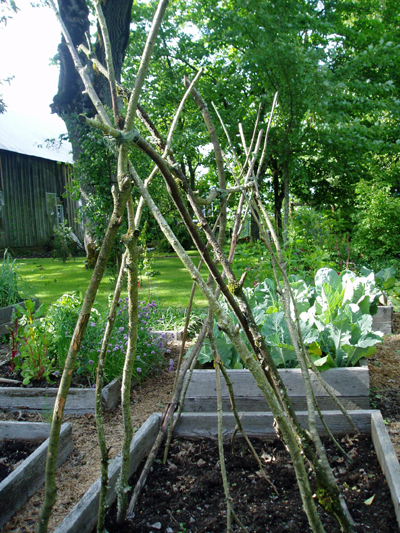 twig vegetable trellis