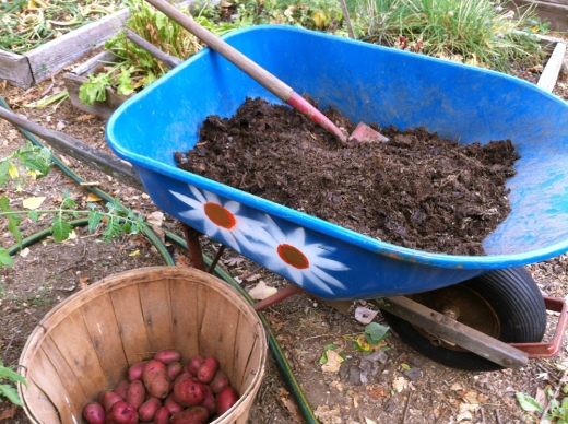 soil and potatoes