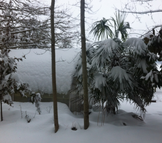 greenhouse and palm in snow