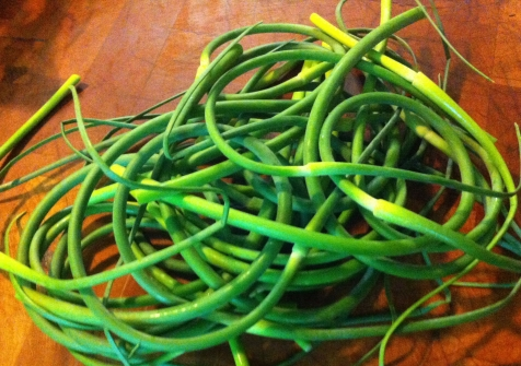 garlic scapes harvested