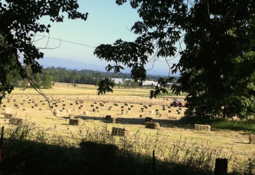 hay bales in the field, Oregon
