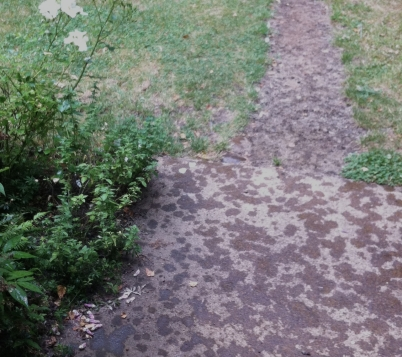 giant summer rain