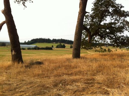 farm field August
