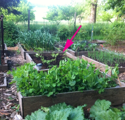May vegetable garden