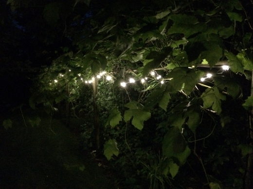 LED string lights in the garden.